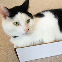 Not for Trade/Sale: My Cat